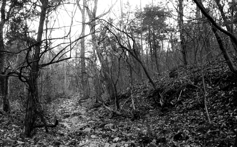 Sparks Creek Walk